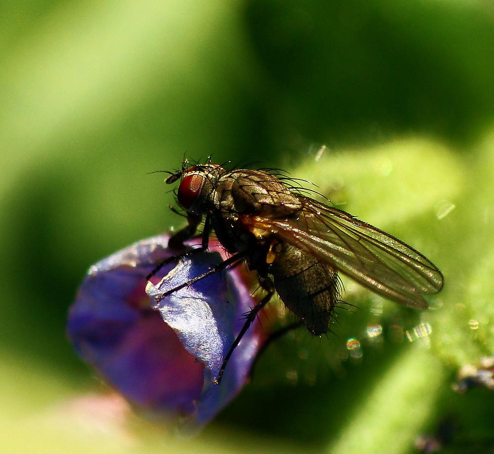 Einfach nur Fliege !