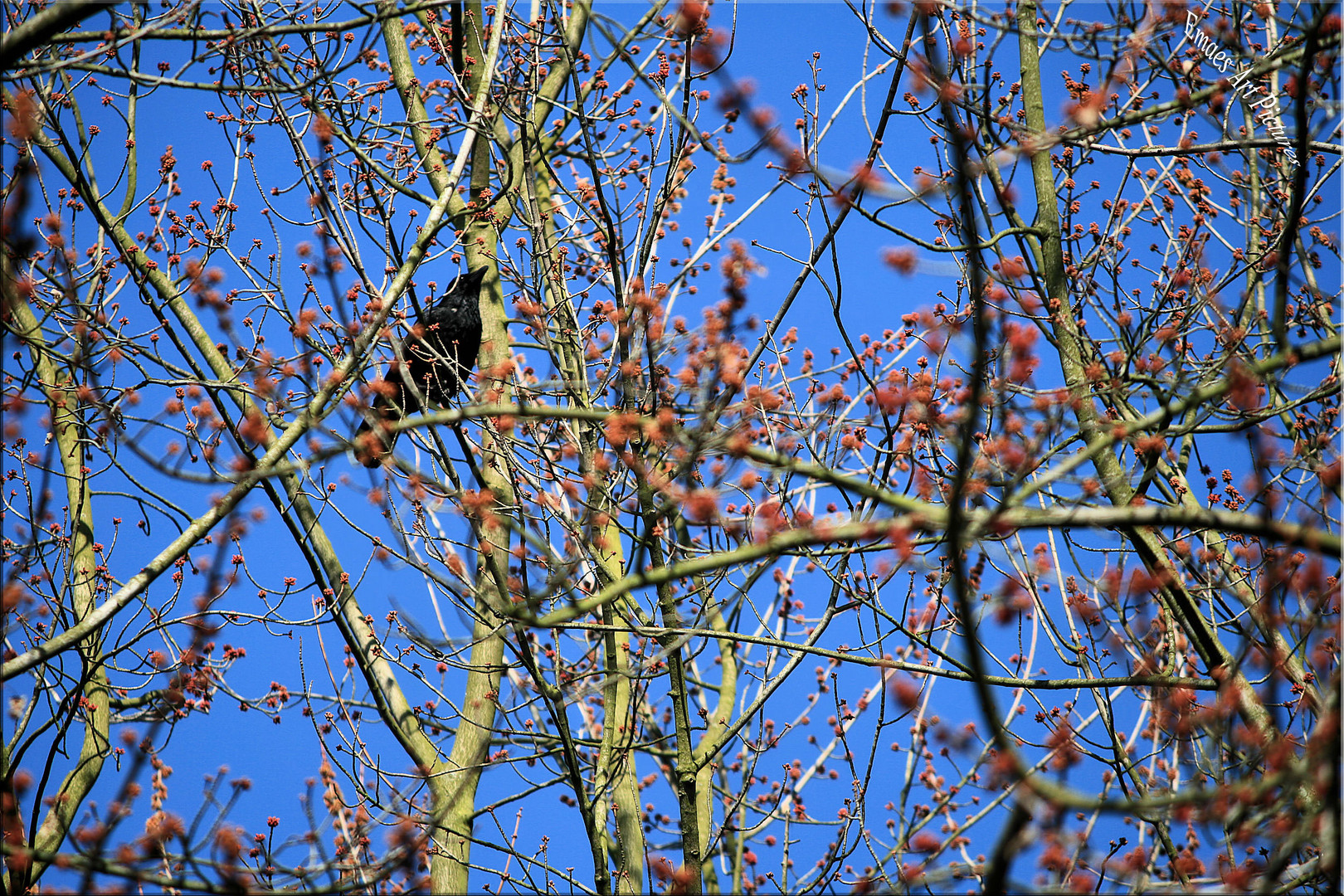 ~~ Einfach nur Frühling ~~