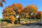 ... einfach nur Goldener Herbst, ...