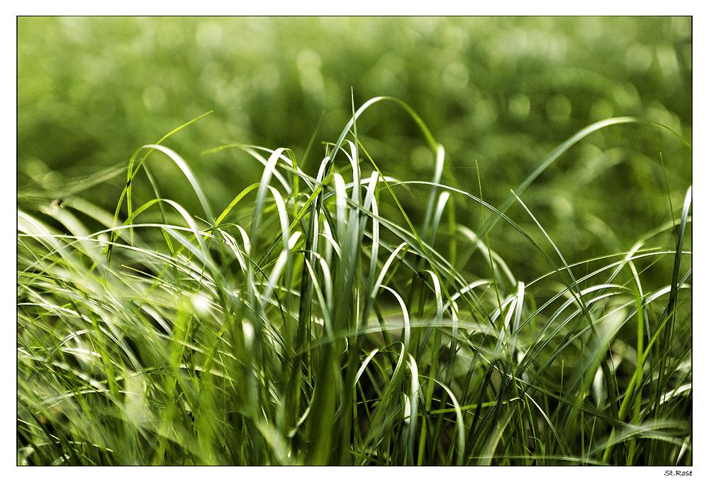 Einfach nur Gras