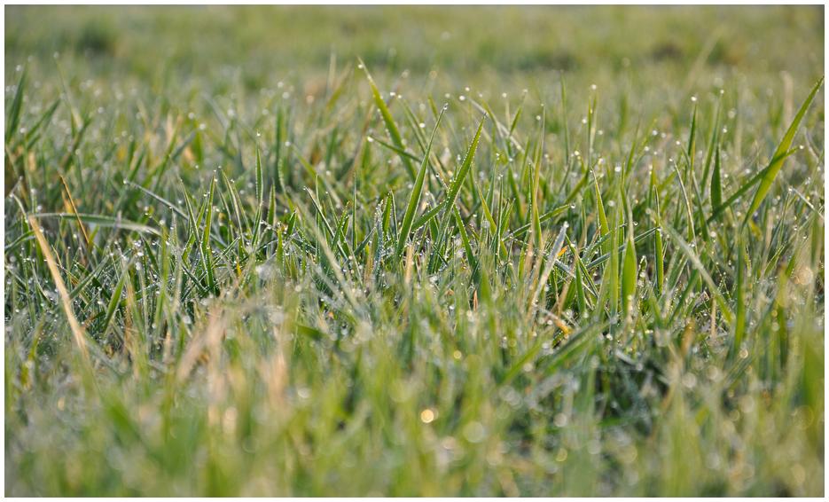 einfach nur Gras...