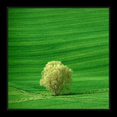 Einfach nur grün
