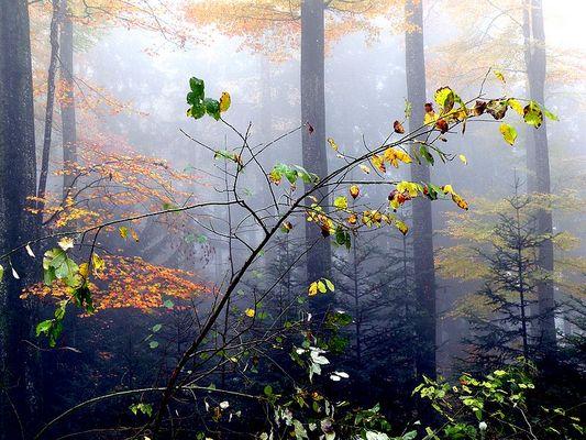 Einfach nur Herbst
