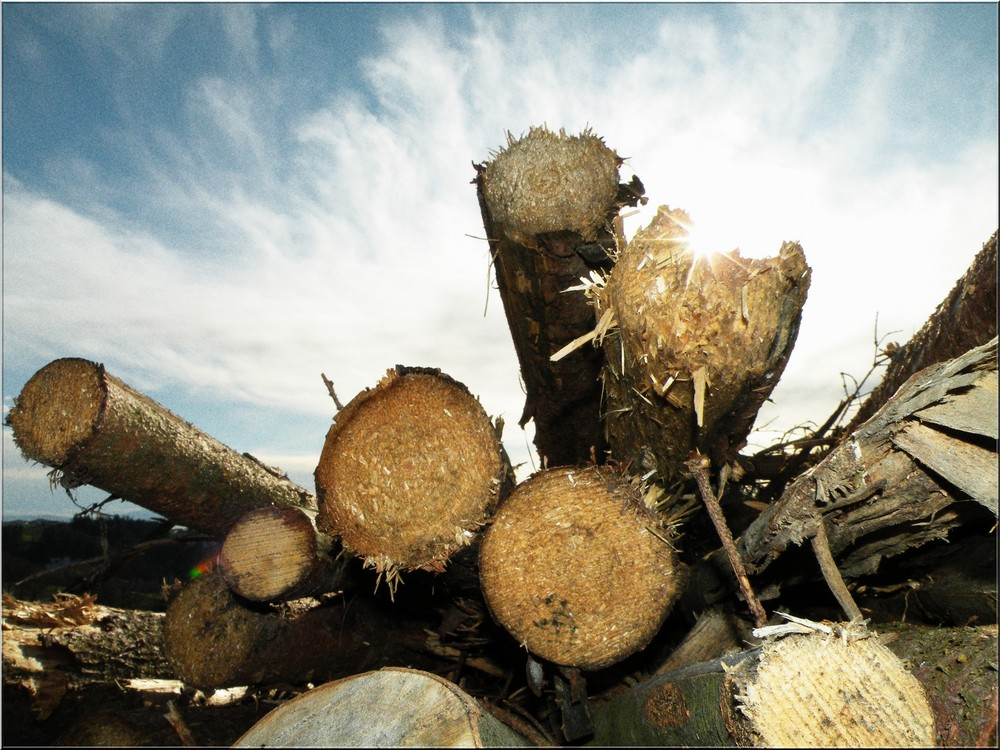 einfach nur Holz