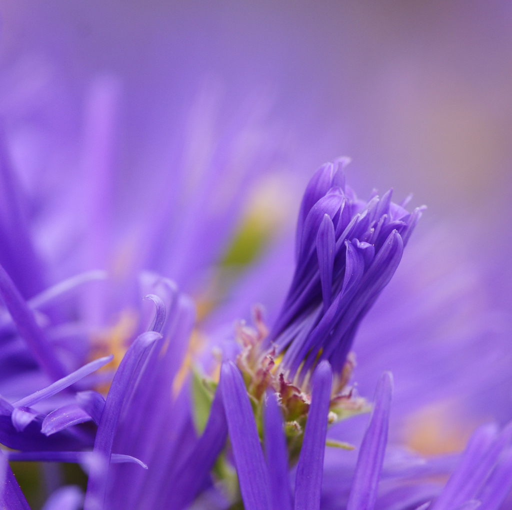 Einfach nur lila.......