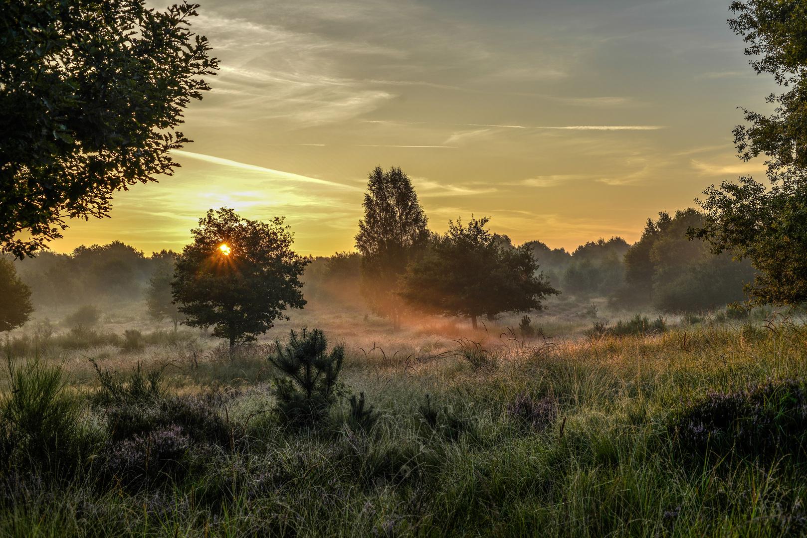 Einfach nur Morgenlicht