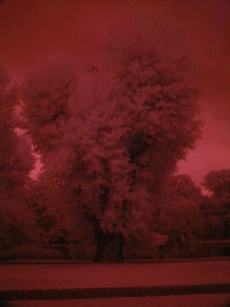 ...einfach nur schön dieser Baum...