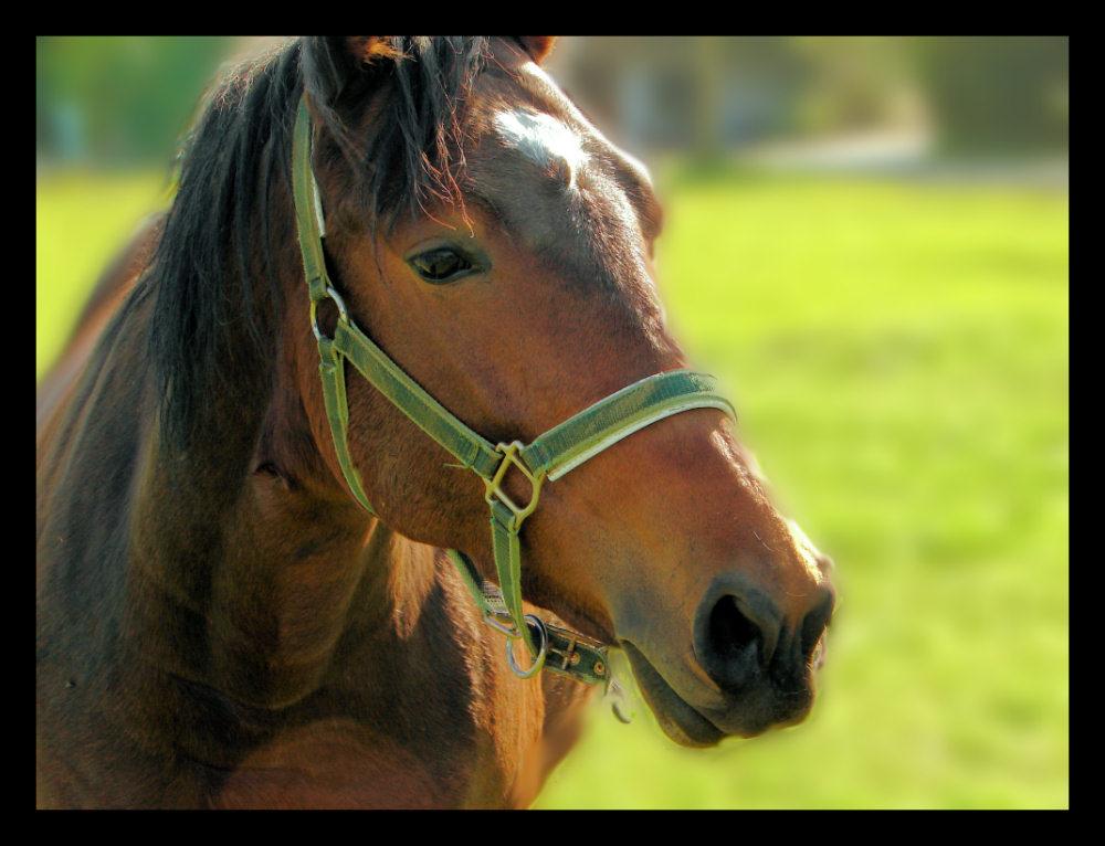 Einfach Pferd