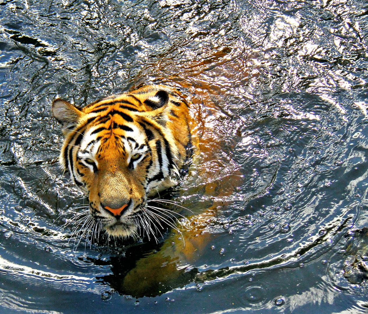 Einfach Schwimmen Schwimmen Schwimmen