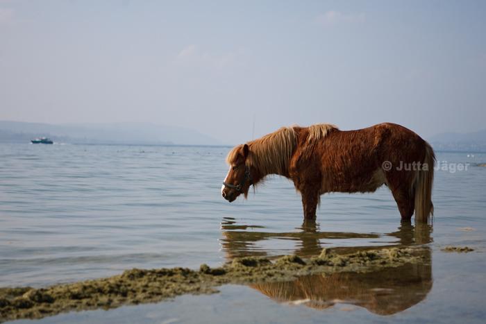 Einfach so im Wasser stehen...