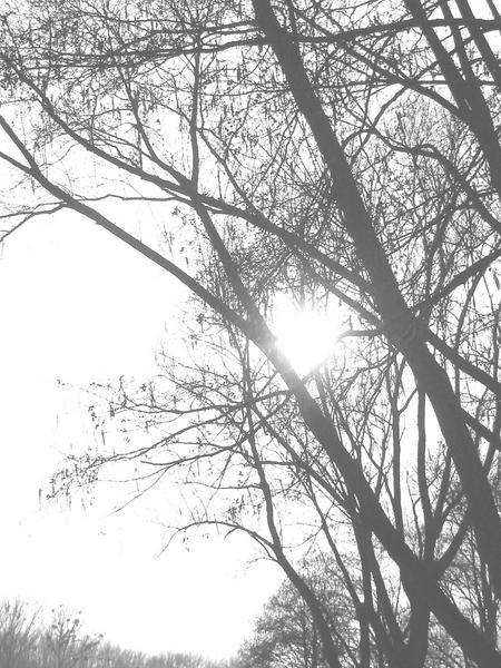 einfach `sonne scheint durch baum` von Romana Humer-Schneeberger
