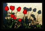 Einfach Tulpen...