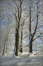 Einfach Winter