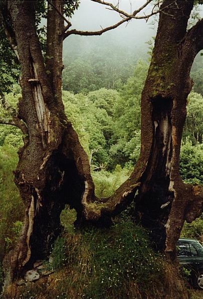 """Einfach zwei Bäume oder - """"Gemeinsam übersteht man alles"""""""