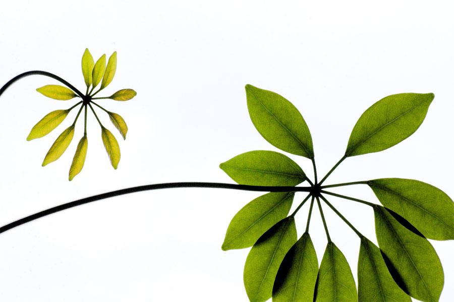 Einfache zimmerpflanze foto bild pflanzen pilze - Zimmerpflanze rankend ...