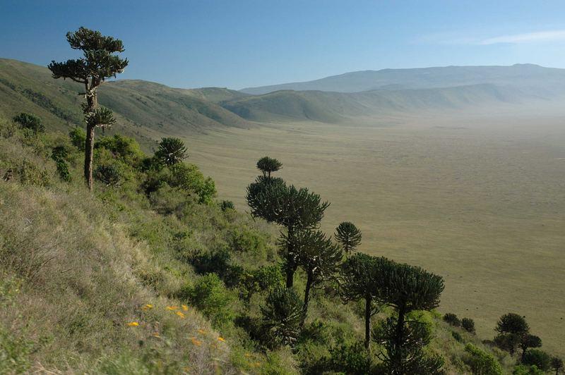 Einfahrt - Ngorogoro Krater