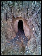 Eingang zum Baumpalast