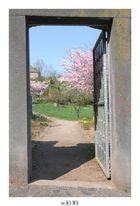 Eingang zum Kräutergarten