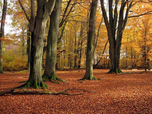 Eingang zum Urwald