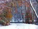 Eingang zum Winterwald