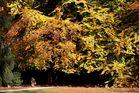Eingang zur Blätterhöhle