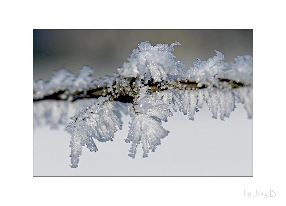 ... Eingefrostet ...