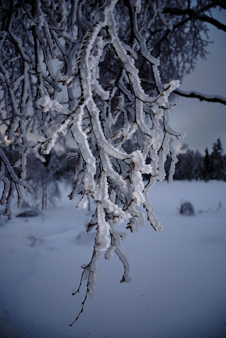 Eingepackte Zweige