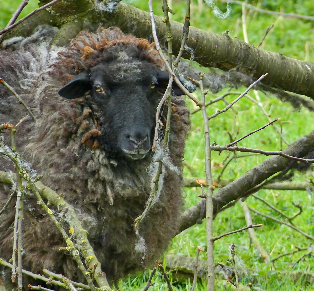 Eingerahmt in Wolle