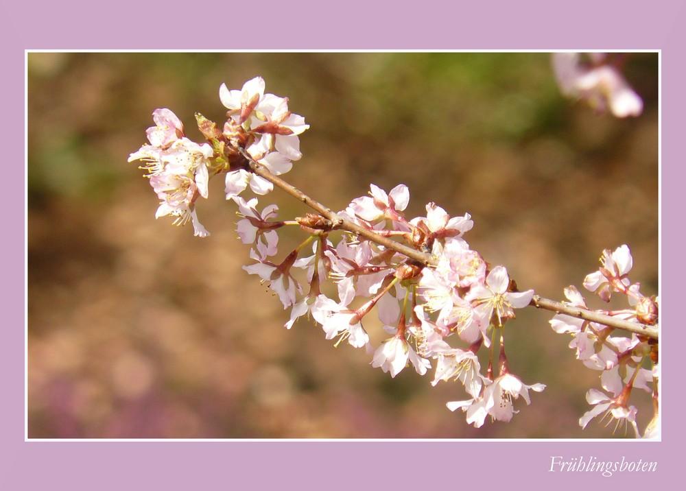 eingerahmte Frühlingsboten
