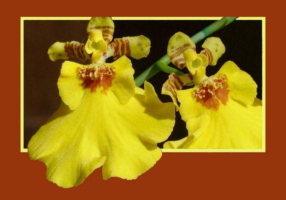 eingerahmte Orchidee