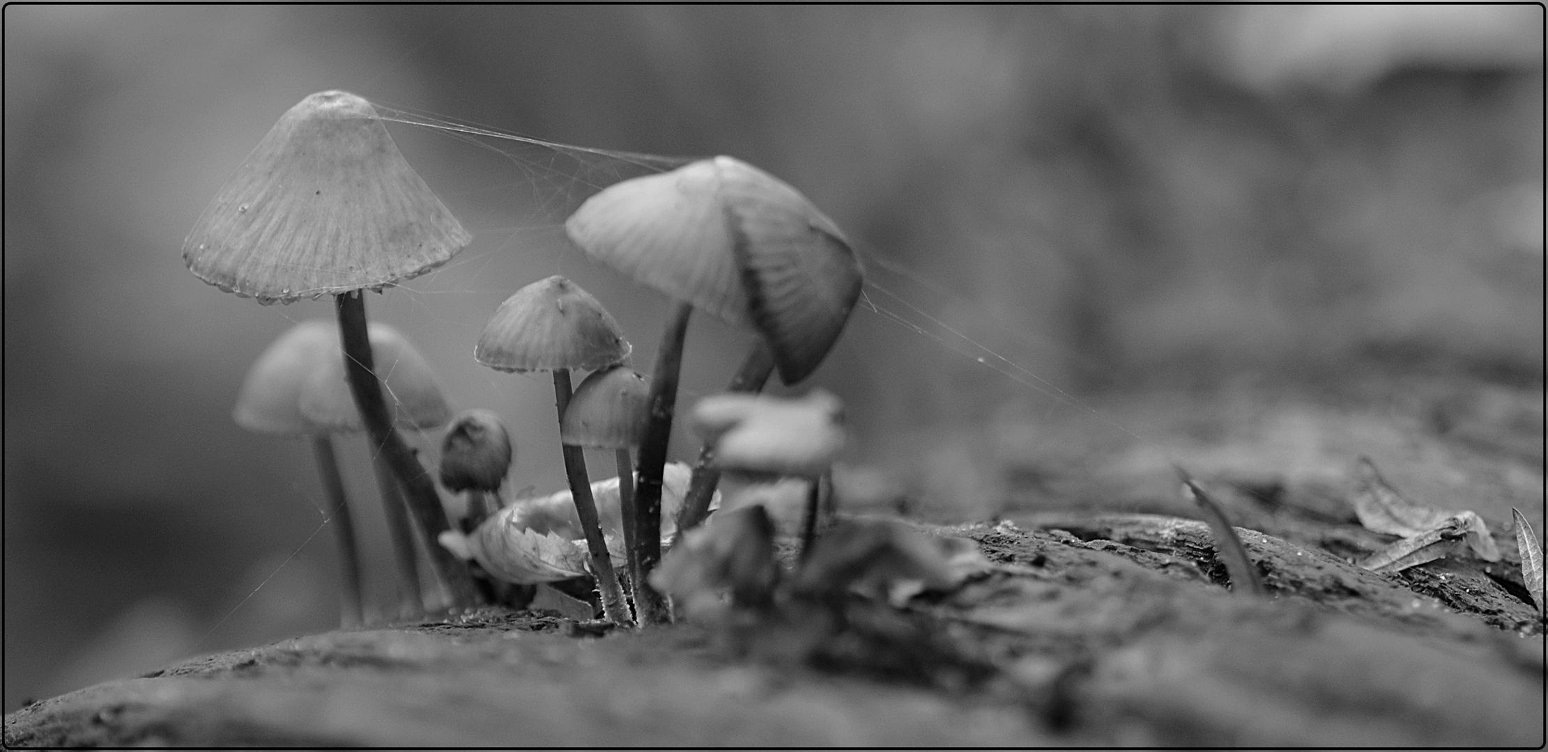 Eingesponnene Pilzfamilie
