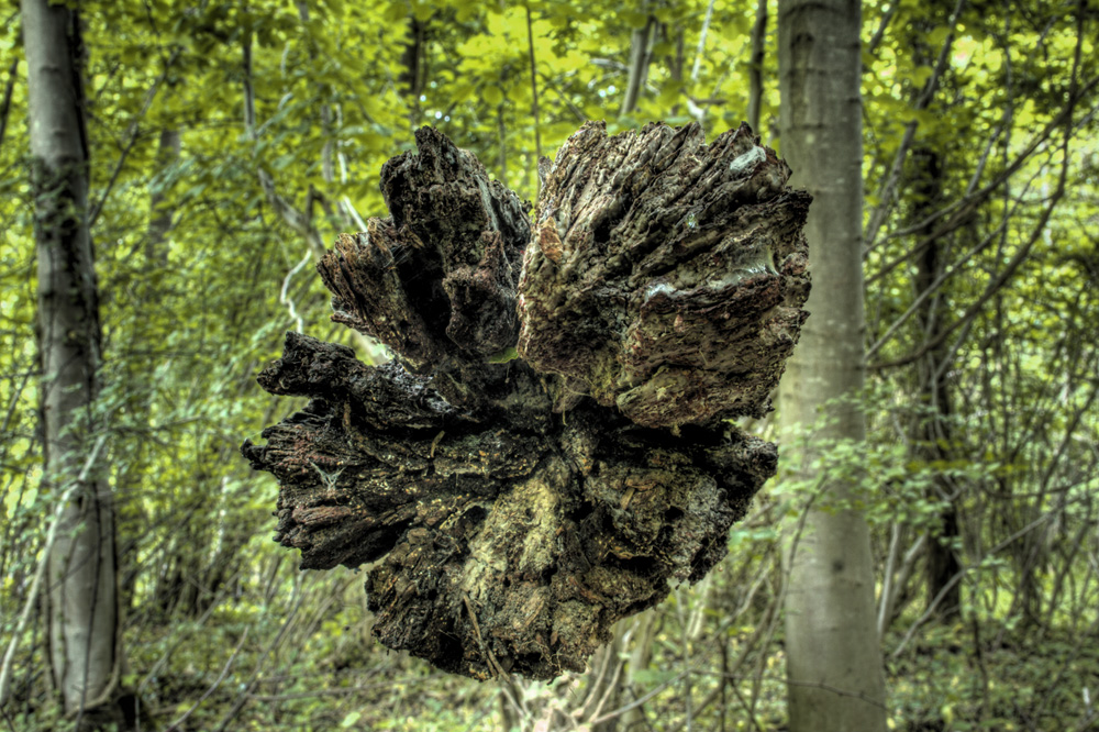 einheimische wälder #1