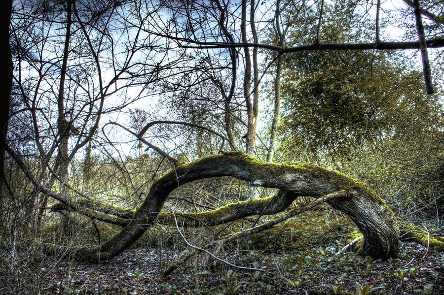 einheimische Wälder #2