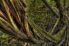 einheimische Wälder #3