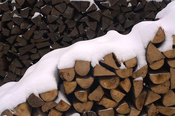 einjähriges und zweijähriges Holz