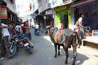 Einkaufspassage mit Kuh