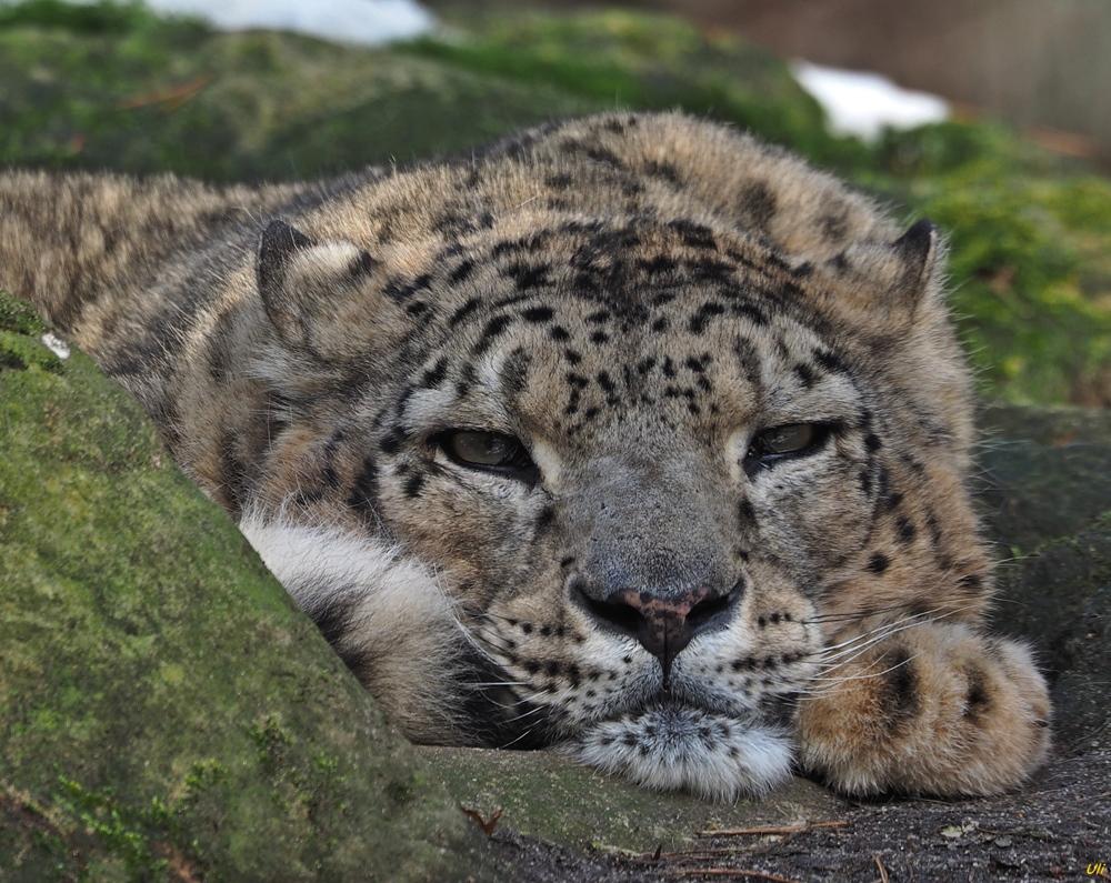 einladung zum kuscheln foto & bild | tiere, zoo, wildpark, Einladung