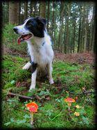 Einmal im Märchenwald... Rotkäppchen und der böse Wolf :-)