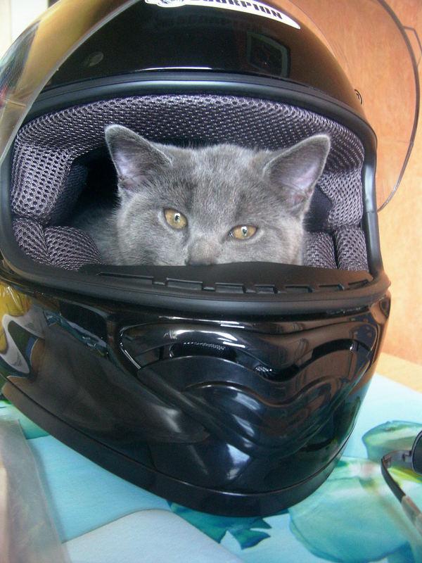 ...einmal Motorrad fahren....