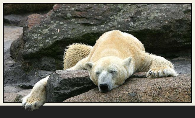 Einmal richtig ausschlafen