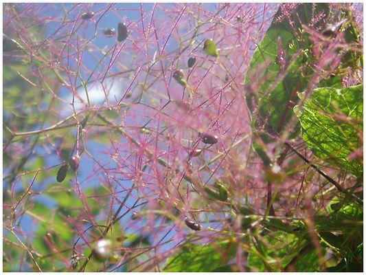 Einmal rosa Blüten....