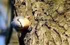 Einmal um den Baum