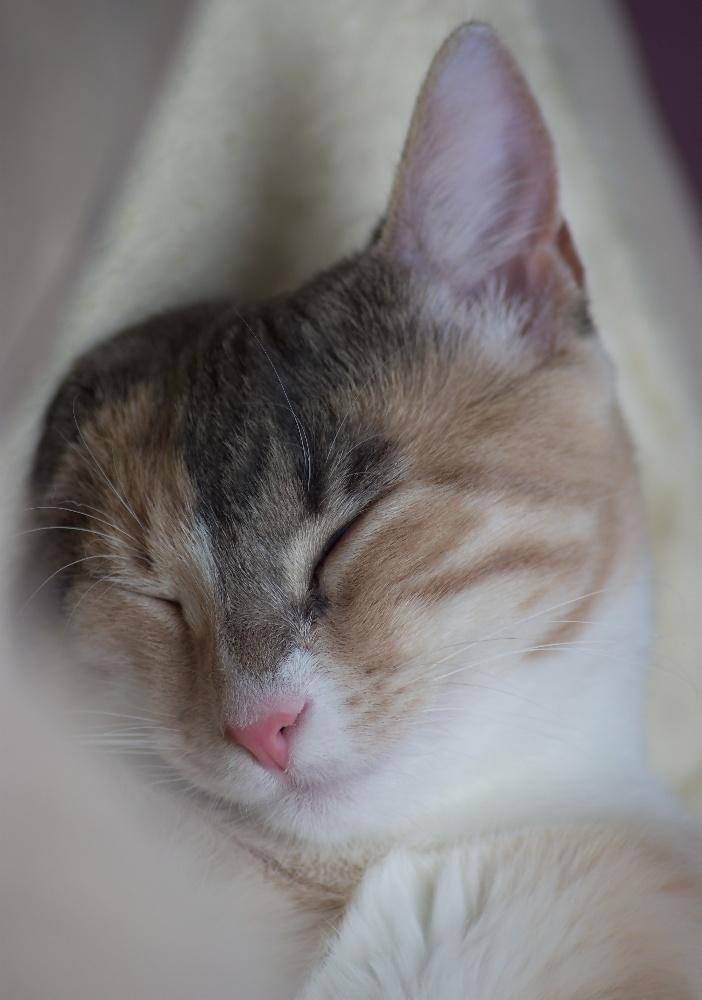 Einohr Katze :-)