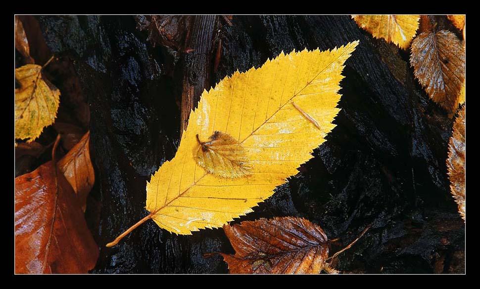 eins der vielen bunten Blätter