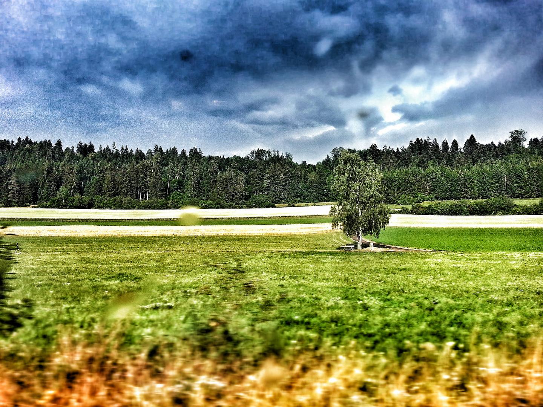 Einsam am Wald