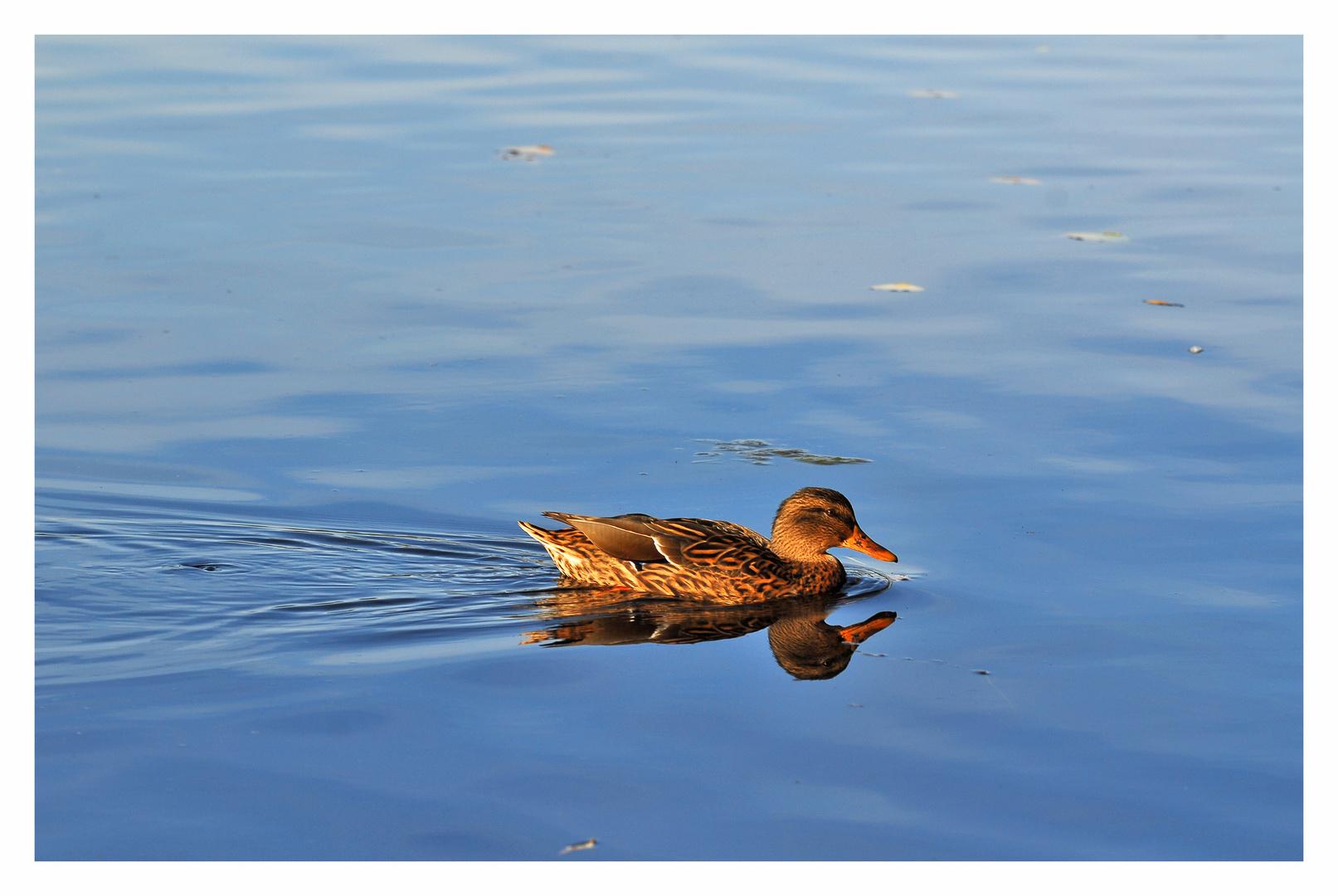 Einsam auf dem Wasser