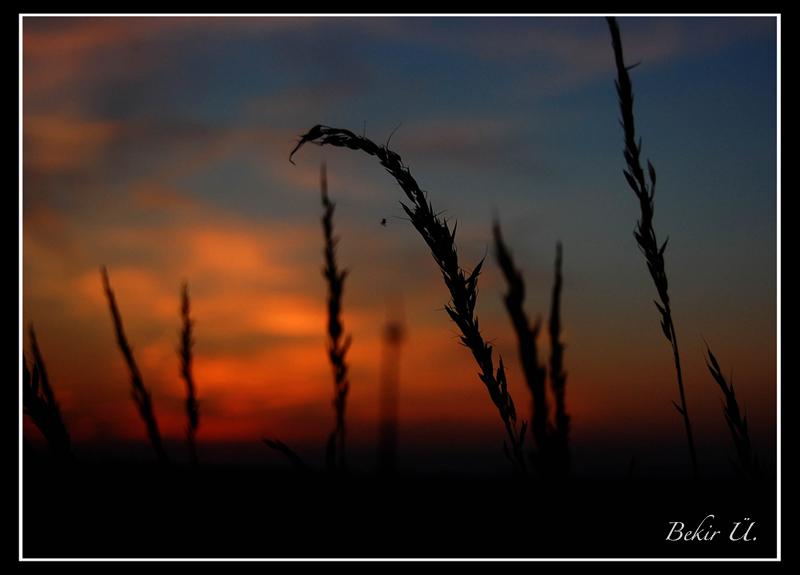 Einsam bei Sonnenuntergang..