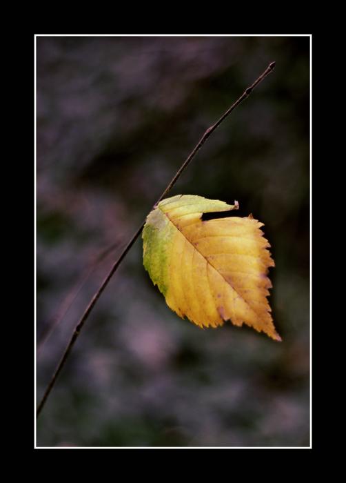 Einsam - Das letzte Blatt am Zweig