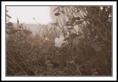 Einsam gegen den Herbst