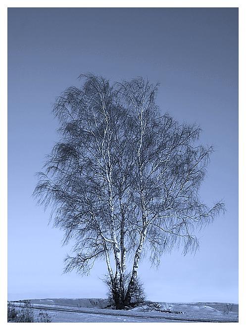 einsam im der Kälte